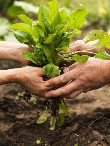 Apoyos a campesinos y agricultores durante la cuarentena