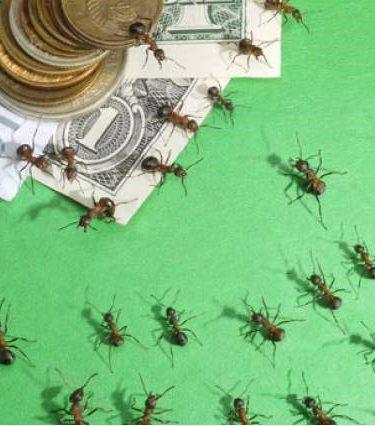 ¿Qué son los Gastos hormiga? ¿Se pueden evitar?