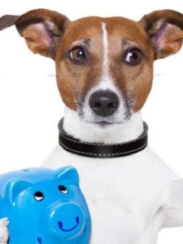 ¿Cómo ahorrar dinero con los gastos de tu mascota?